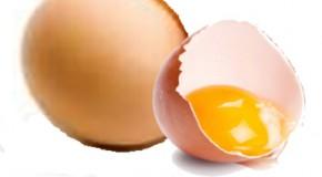 Cholestérol et œufs